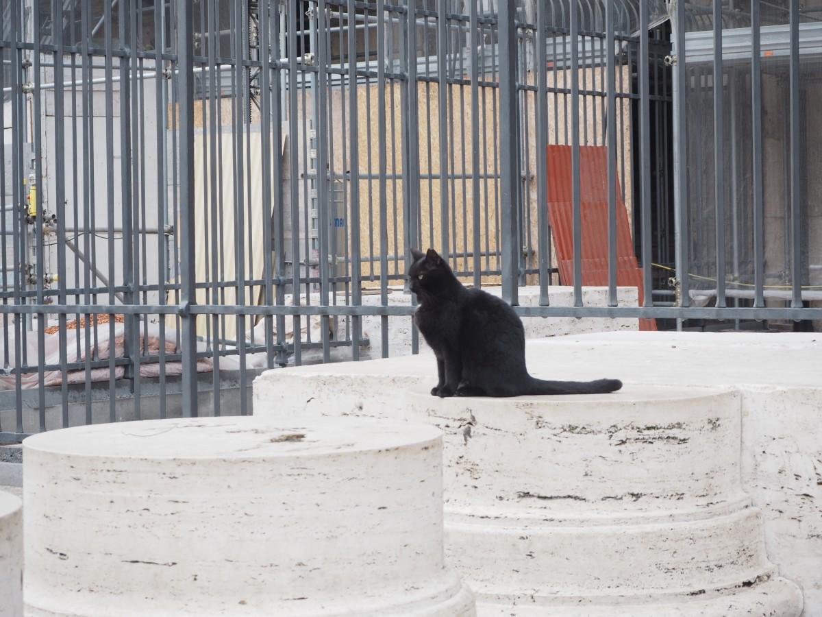 Katze vorm Forum Romanum