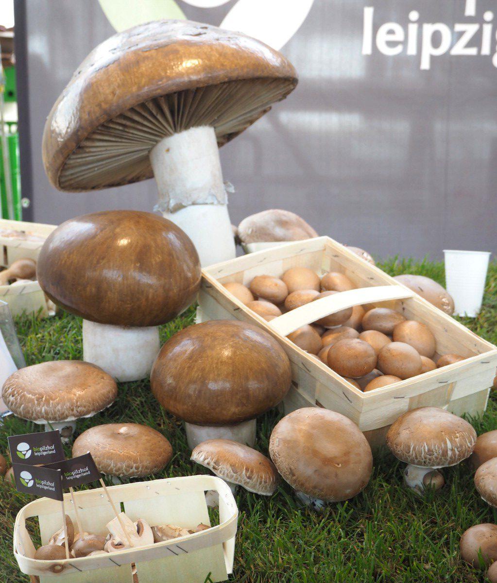 next organic messe berlin pilze portobello leipzigerland