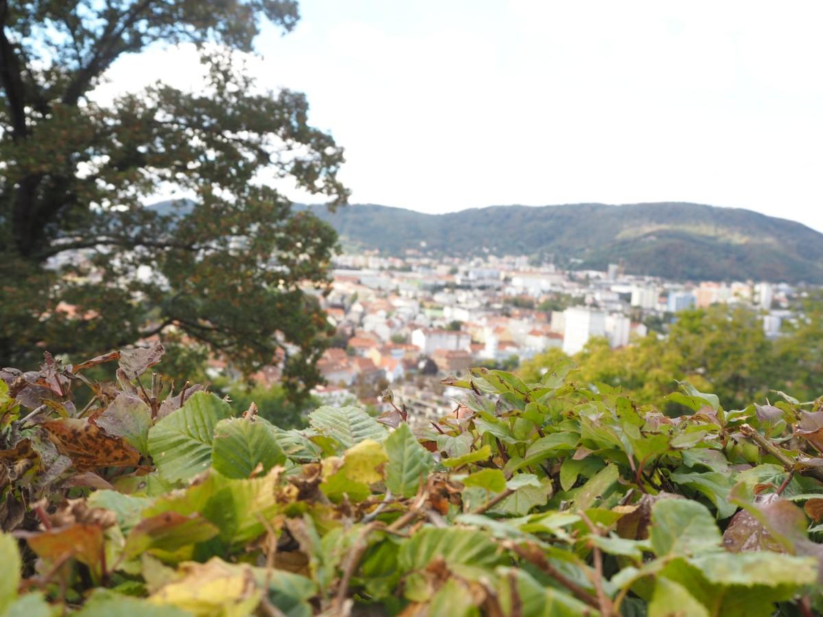 Ausblick über Graz vom Schloßberg mit Bäumen