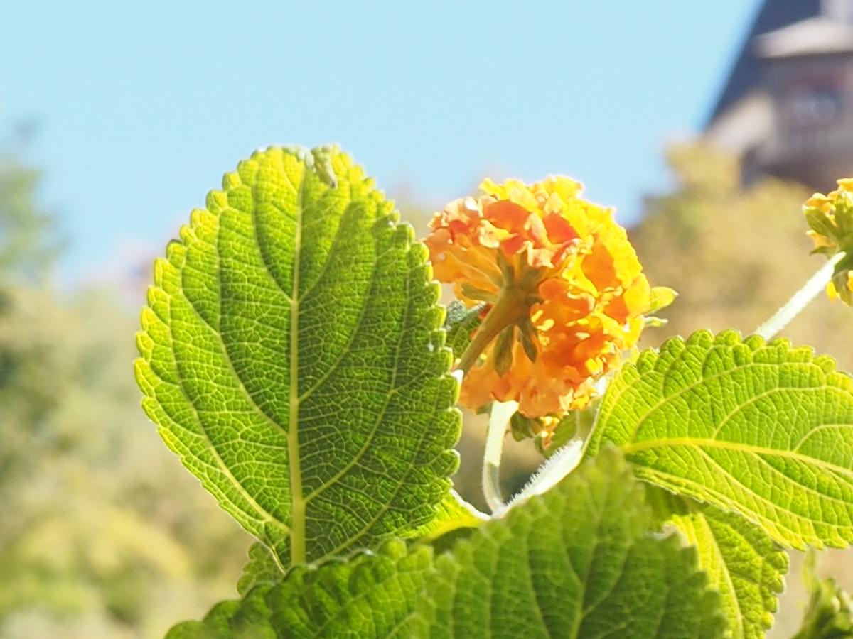 Graz mit Uhrenturm und Blume