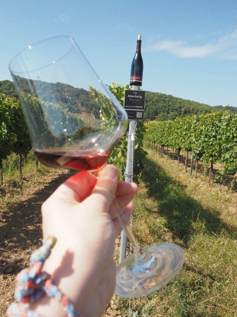 Pinot Noir am Weingut Hillinger.
